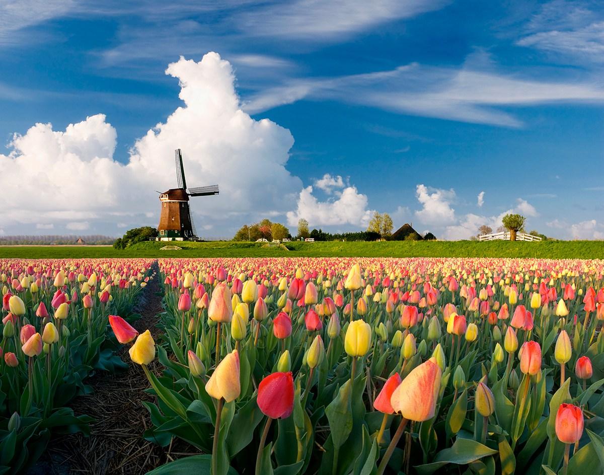 Voyager aux Pays-Bas au printemps en camping-car.
